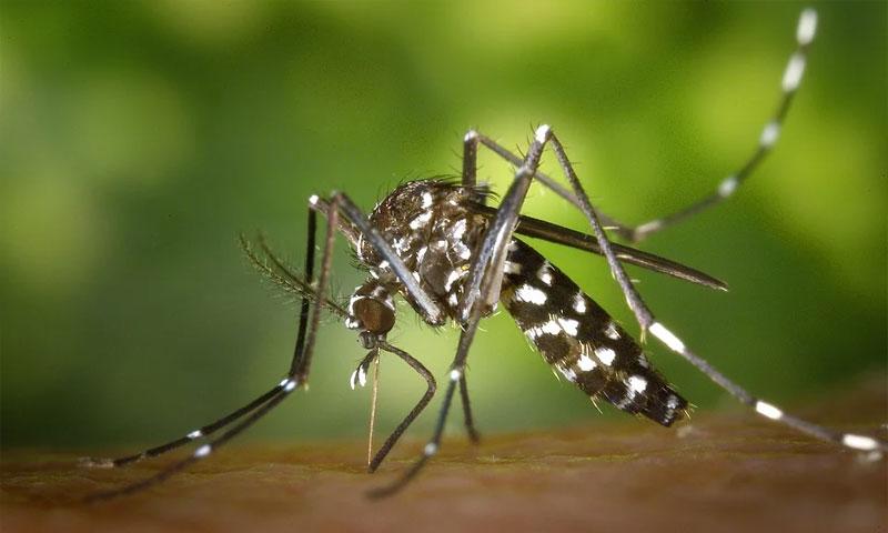 Managing Mosquitos
